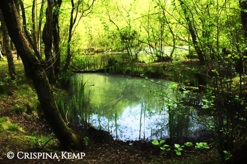 woodland-pools-cp